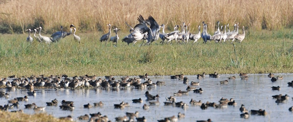 sultanpur-bird-sanctuary