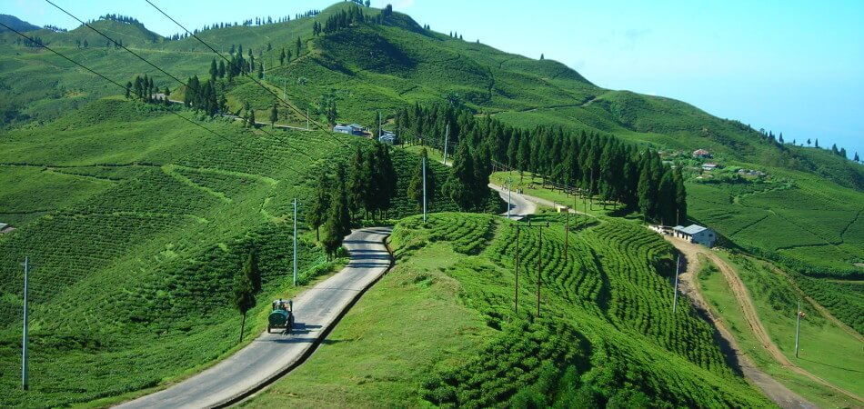 darjeeling-holiday-honeymoon
